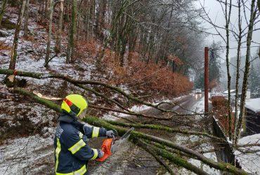 Baum blockierte die Rodlstraße