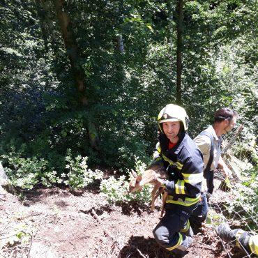 Feuerwehr rettet Rehkitz